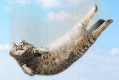 cat-falling